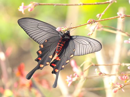 Natural, Creatures, Plant, Insect, Butterfly, Red