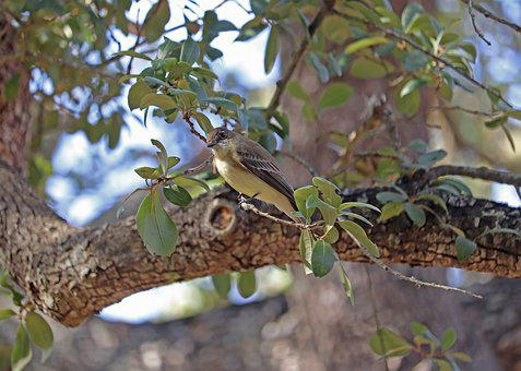Bird, Natural, Live Oak, Green Leaves, Brown
