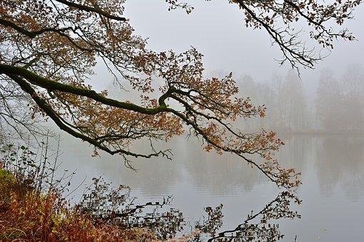 Autumn, Fog, Park, Branch, Water, Brine, Nature