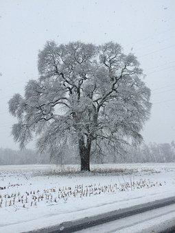 Snow, Tree, Winter, Nature, Cold, Landscape, Trees