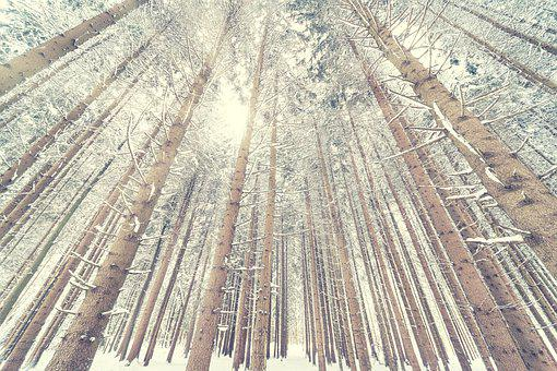 Snow, Forest, Light, Perspective, Sun, White, Wintry