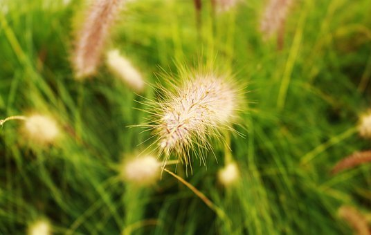 Garden, Grass, Nature, Plant, Meadow, Gardening, Green