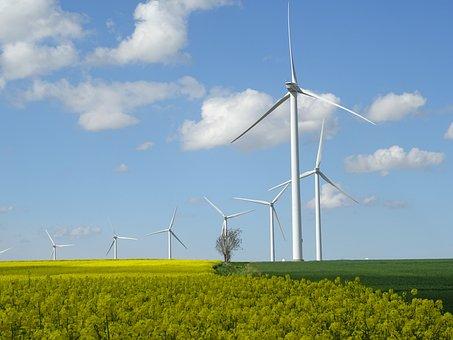 Wind Turbines, Fields Rapeseed, Blue Sky, Rapeseed