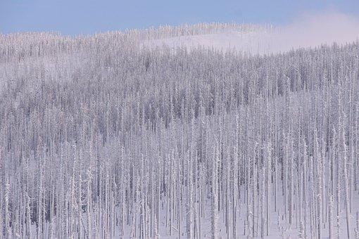 Waldsterben, Dead Wood, Winter, Snow, Bizarre, Frost
