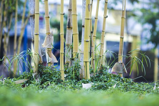 Bamboo Bushes, The Village, Green, Landscape