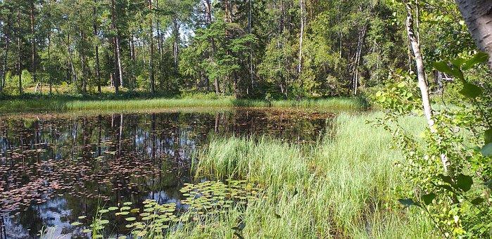 Nature, Birch, Tarn, Tree, Environmental, Scenic, Water