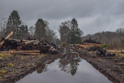 Wood, Tree Trunks, Nature, Firewood, Timber, Trees