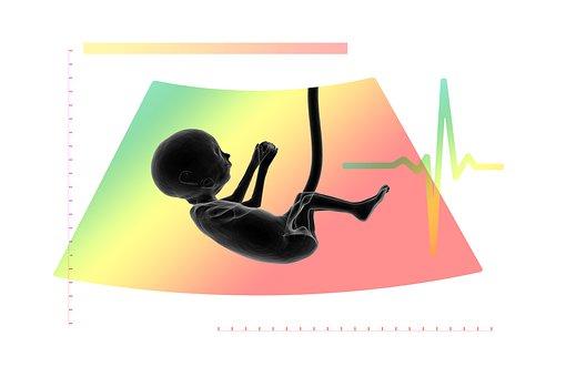 Ultrasound, Fetus, Embryo, Placenta, Logo
