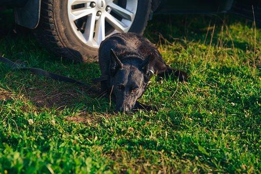 Traveler, The Dog At The Car, Guards, Waiting, Nature