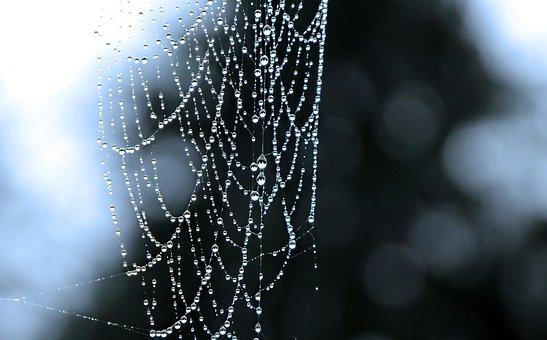 Spider, Web, Drip, Dew, Water, Wet, Cobweb, Nature