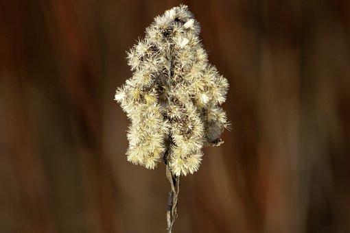 Wildflower, Goldenrod, Meadow Flower, Flower, Flowers