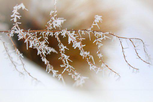 Ice, Branch, Frosty, Iced, Snowflake, Winter, Frost