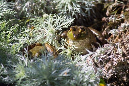 Pond, Frog, Wisconsin, Wildlife