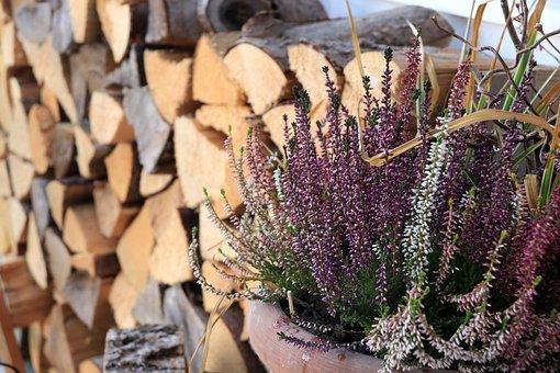 Heather, Erika, Plant, Wood, Holzstapel