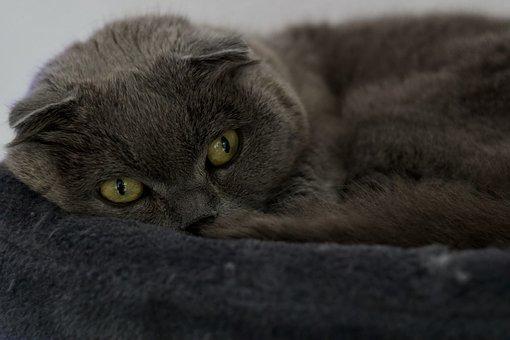 Cat, Pet, Animals, Kitten, Pretty, Feline, Domestic Cat