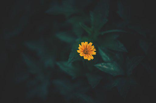 Nature, Earth Hour, Earth, Landscape, Flower, Green