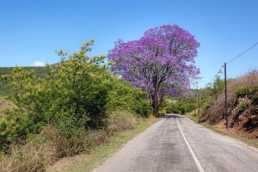 Flower Purple, Tree, Lilac, Mood, Summer, Plant