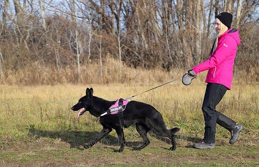 Black German Shepherd, Dog, Walk, Happy, Friendship