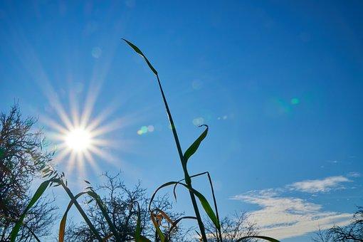 Sun, Backlighting, Star, Dazzling Star, Grass, Halm