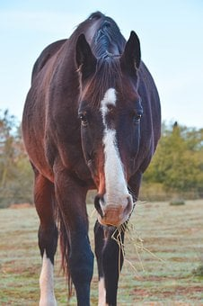 Horse, Equestrian, Wild, Animal, Equine, Nature