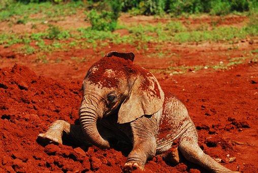 Feeding Baby Elephants, Dust Bath, Nairobi, Kenya
