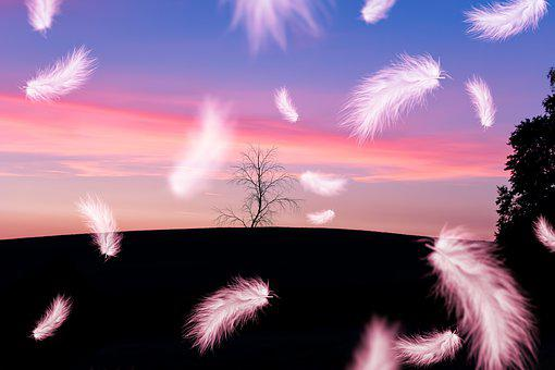 Feather, Flying, Nature, Harmony, Freedom, Landscape