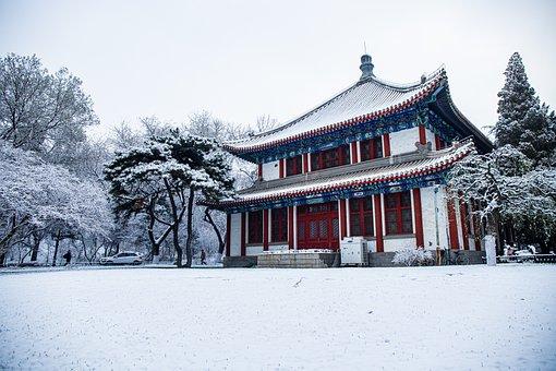 Architecture, Leaf, Plant, Snow, Winter, White