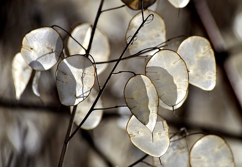 Silver Valley, Plant, Light, Transparent