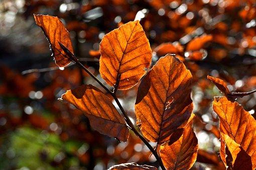 Forest, Nature, Foliage, Autumn, Tree, Light, Mood