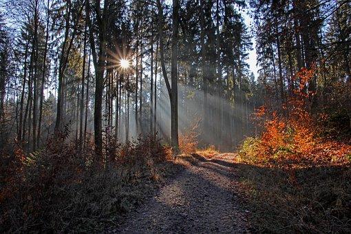 Sun, Forest, Mood, Nature, Trees, Light, Away, Romantic