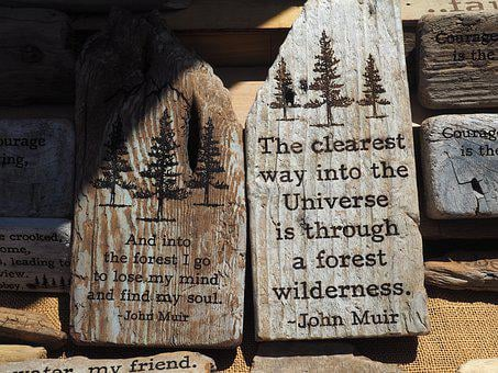 Quote, Nature, Wood, Natural, Inspiration