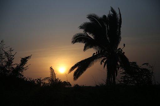 Sol, Nature, Landscape, Night, Tree