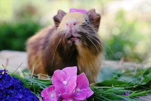 Pig, Pet, Animal, Cute, Nature, Pigs, Sweet, Portrait
