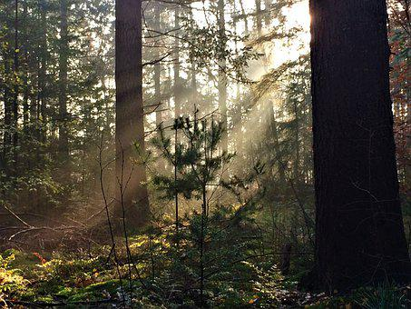 Forest, Early, Nature, Sun, Rays, Sunlight, Winter