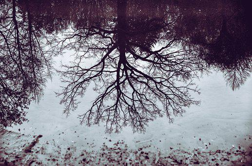 Tree, Mirroring, Mirror Image, Water, Reflection