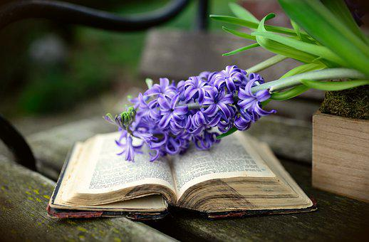 Hyacinth, Spring Flower, Flower, Flowers