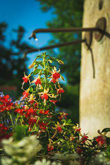 Flowers, Spring, Fontaine, Water Source, Outdoors