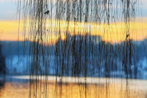 Landscape, Sunset, Sun, Lake, Park, Twigs, Willow, Tree