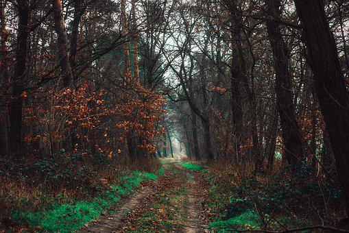 Forest, The Path, Way, Landscape, Mood, Tree, Nature