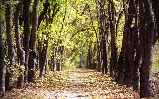 Landscape, Nature, Park, Trees, Line, Green, Trunks
