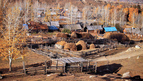 Wooden House, Valley Pile, Birch, Autumn, China, Altai