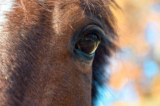 Horse, Equestrian, Wild, Animal, Equine, Nature