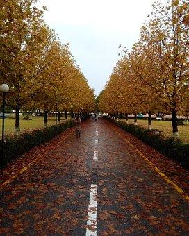 Autumn, University, Trees, Rain, Winter