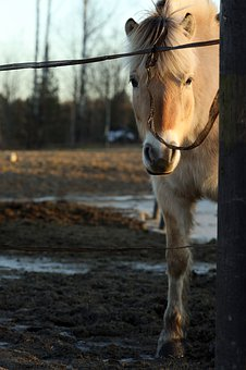 Horse, Animal, Farm, Outdoor