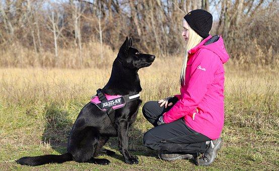 Friendship, Black Dog, German Shepherd, Love, Attention