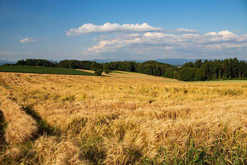 Field, Nature, Bauer, Cereals, Landscape