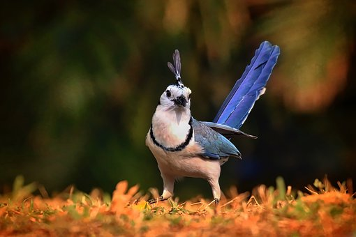 Magpie, Jay, Bird, Peanut, Colorful, Feathers, Outdoors