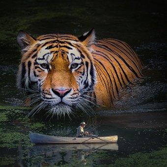 Tiger, Predator, Animal World, Dangerous, Carnivores