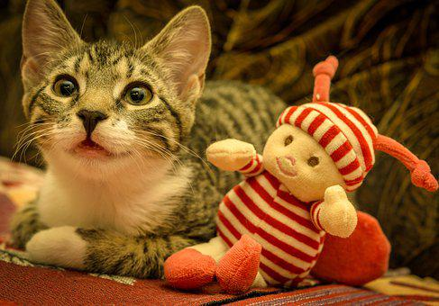 Cat, Mackerel, Lying, Doll, Play Kitten, Domestic Cat