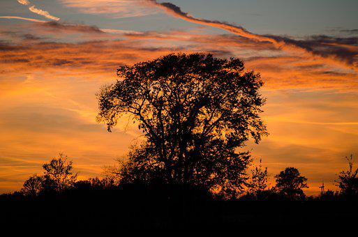 Silhouette, Sunset, Orange, Sky, Tree, Clouds, Nature